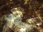 サンゴとブルーな熱帯魚